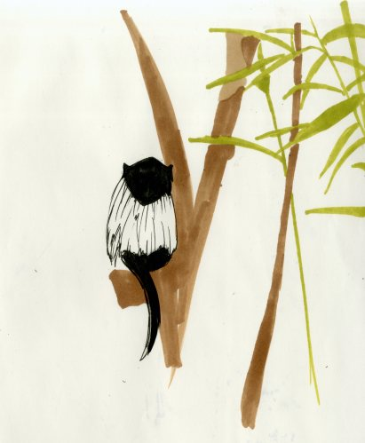 zoo sketches004