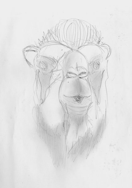 zoo sketches012